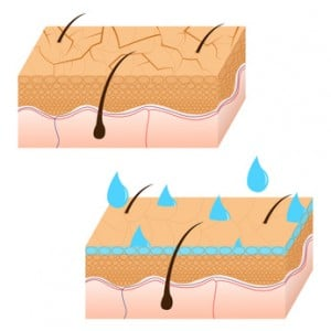 Skin hydration and dry skin sectional view.